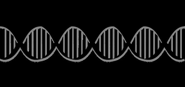 Genomic Vision unveils TeloSizer® for precise cellular health analysis